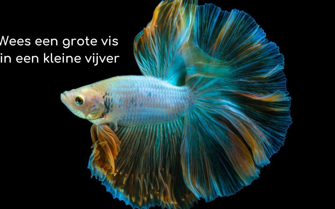 wees-een-grote-vis-in-een-kleine-vijver