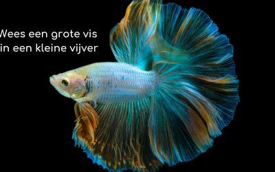 Wees een grote vis in een kleine vijver